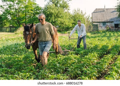 Farmers are plowing a land.  They are using a plow and a horse to cultivate a soil.  Men are hilling up  rows of potatoes.