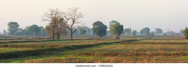 Farmer's rice fields and seasonal morning sun before farming in Thailand, Surin Province