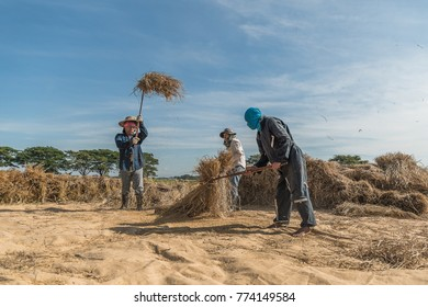 Farmers rice grain threshing during harvest time in 12 Dec 2017 northern Lampang, Thailand