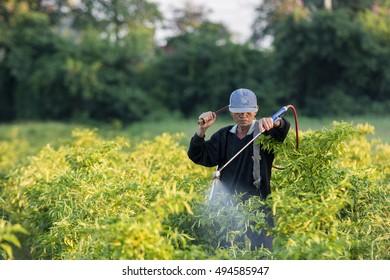 Farmers spray water bio on the chili field .