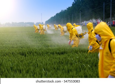 farmers spraying pesticide in wheat field wearing protective clothing