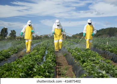 farmers spraying pesticides in strawberry garden
