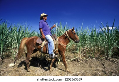 Farmers in the sugar cane fields near the city of Holguin on Cuba in the caribbean sea.    Cuba, Holguin, September, 2005