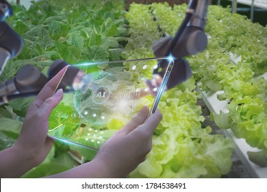 Farmers use futuristic tablet to inspect robotic arm harvest produce and monitor agricultural product vegetable farm,concept technology agriculture industry 4.0,with artificial intelligence or AI