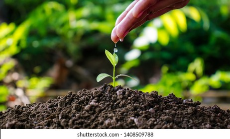 Farmers are watering small trees by hand on a natural green background with the World Environment Day concept.