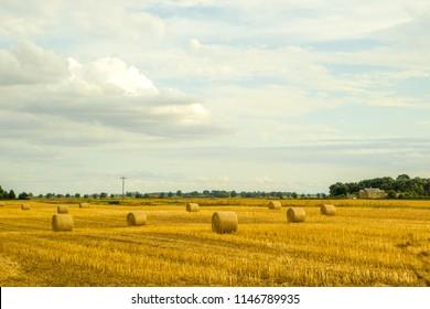 A farmers wheat field in the United Kingdom.