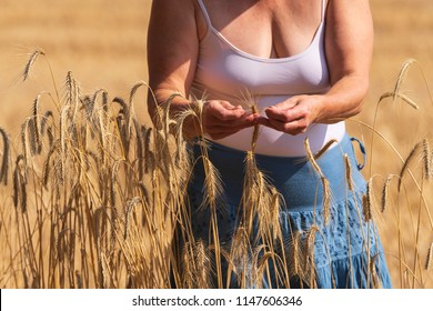 Farmer's wife checks the ears for ripeness, size and moisture content
