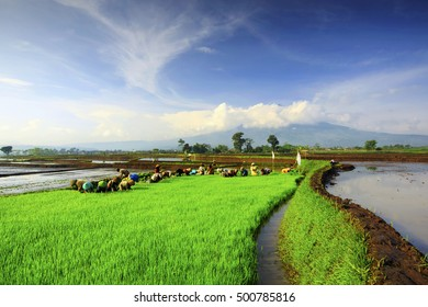 farmers working in the fields with a beautiful view of the mountain Cikuray,,west java indonesia
