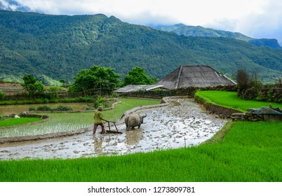 Farmers working on beautiful terraced rice fields in Northern Vietnam.