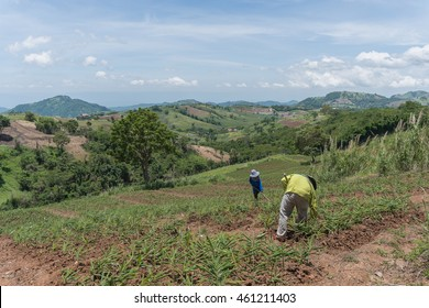 Farmers working on mountain
