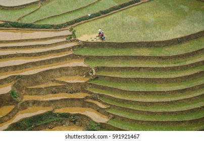Farmers working on terraced rice fields at rain season in Lao Cai, Vietnam. The terraced rice fields in most of the mountain areas in the North of Vietnam.