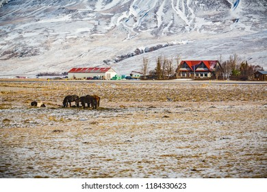 Farmhouse with horses in the forground and snowy mountains in th