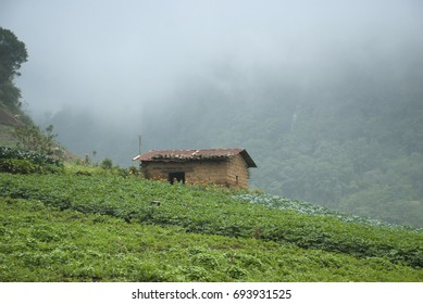 Farmhouse and vegetable fields. Guatemala, Zunil Quetzaltenango.