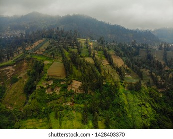 Farming along the slope of a mountain