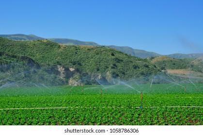 Farming, Auto irrigation system