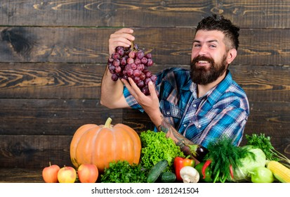 Farming concept. Grapes from own garden. Farmer bearded guy with homegrown harvest on table hold grapes. Farmer proud of grapes harvest. Man hold grapes wooden background. Vegetables organic harvest.