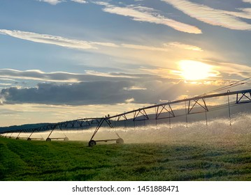 Farming field with irrigation sprinklers at sunset