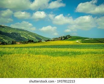 Farming Fields in  North Israel near Haifa