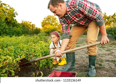farming, gardening, agriculture and people concept - young man planting potatoes at garden or farm. The agriculture, plant, harvesting concepts