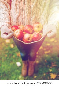 farming, gardening, harvesting and people concept - woman with apples at autumn garden