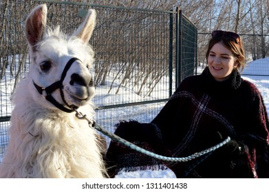 A farming girl takes care of her white Llama.