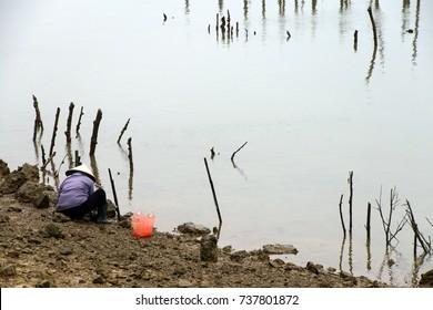 Farming mussels and clams near Haiphong,  Vietnam