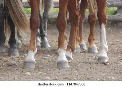 farming ranch horse foot herd