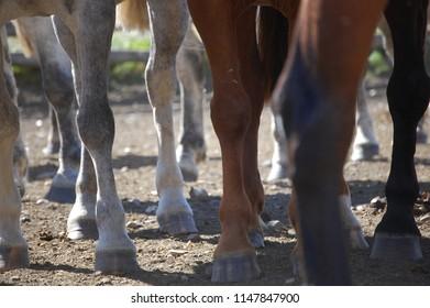 farming ranch horse foot herd