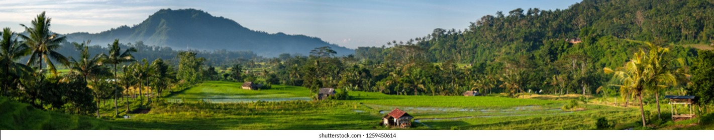Farming the rice terraces in the Village of Sidemen, Bali. Eastern Bali boasts some of the most beautiful and dramatic rice fields in all of Indonesia. Perfectly manicured terraces of verdant green.