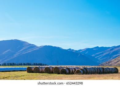 Farming, Southland, New Zealand