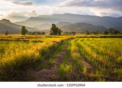 Farmland after harvest, beautiful countryside scenic before sunset in Lom Kao, Petchabun province of Thailand