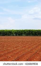 farmland with blue sky view