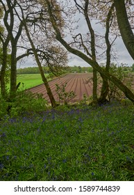 Farmland at the edge of Darroch Woods on a grey wet day in May.