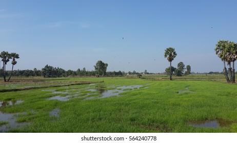 Farmland landscape in rainy season