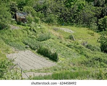 Farmland near the Italian city of Genoa.