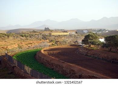 Farmland on the Fuerteventura island, Spain