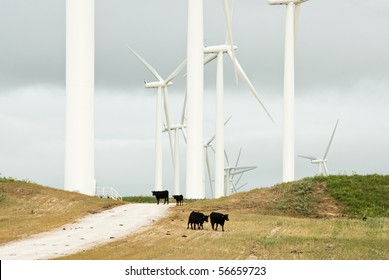 farmland on a hot cloudy day with cattle in the foreground and wind turbines in the background near Lake Benton Minnesota.
