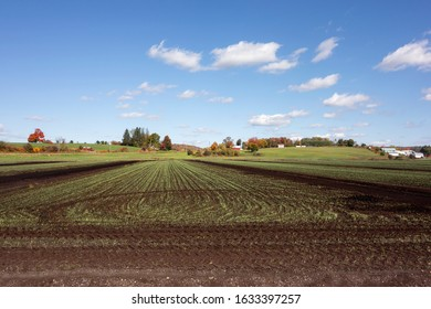 Farmland in rural New York's black dirt region in Autumn.