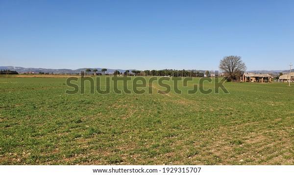 Farmland scape in a sunny day