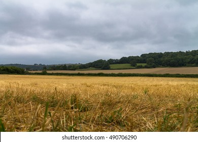Farmland that has recently been harvested
