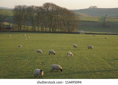 farmland in the UK