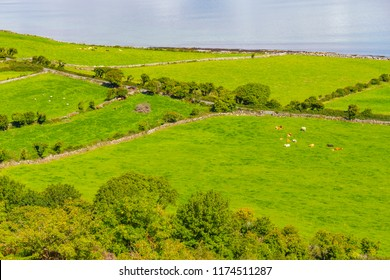 Farms with cows and horses in Burren way trail with Galway bay, Ballyvaughan, Clare, Ireland