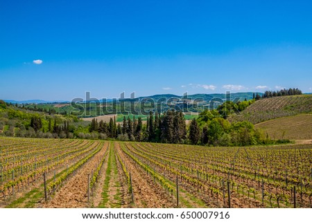 Farms Grape Wine Tuscany Toscana Italy Stock Photo (Edit Now