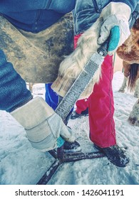 Farrier clear surface of horse's hoof with rough rasp. Blacksmith cleans the hooves of farm horse with special tools.