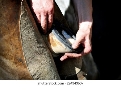 farrier holds a hoof of horse leg