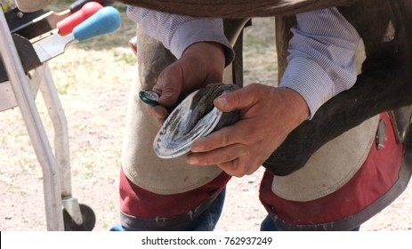 A farrier measures the finished shoe ion the horse hoof. Farriers only deal with fashioning and caring for the feet of hoofed animals.