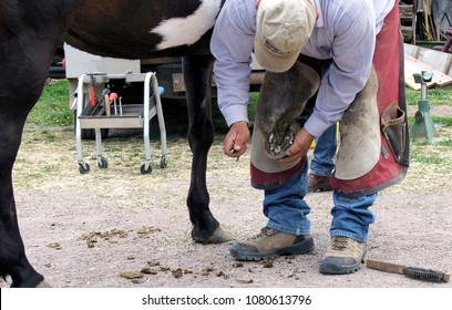Farrier work. Farrier is a specific form of blacksmithing that works with hoofed animals. Farrier picks out a front hoof getting it ready for shoeing.