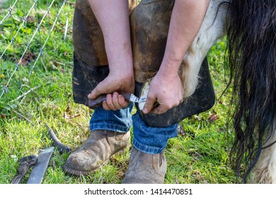 Farrier working on the hooves of a Shetland Pony on a farm in England, UK