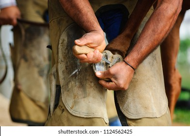 Farrier working on horse's hoof and paring frog