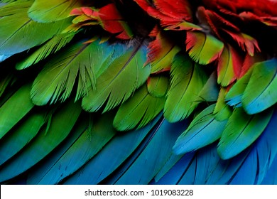 Fascinated blue green and red of Green-winged Macaw feathers in close up, exotic texture and background